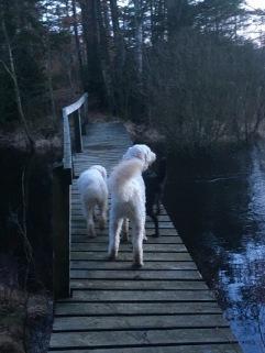 Charlie kollar ut över vackra sjön