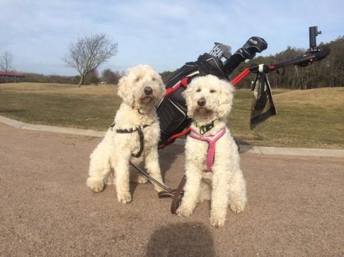 Charlie och Saga framför Husses golfbag.