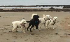 Saga, Buddy, Charlie och Mitzy