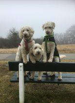 """Saga, Charlie och Mitzy. Vi var i Varberg och hälsade på härliga Mitzy en eftermiddag i förra veckan. """"Läshunden Mitzy"""" finns på Facebook."""