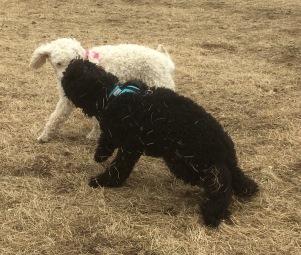 Saga med en höstack vid namn Buddy