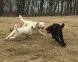 Haha, ni kan inte ta mig..... Säger Buddy till Charlie och Saga