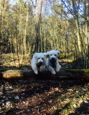 Hopp i skogen.