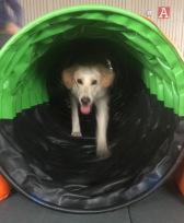 En sprudlande glad Lycke i tunnel.