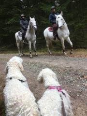 Fint möte i skogen med dessa snälla och nyfikna arabhästar.