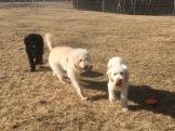 Buddy bakom tjejerna Molly och Saga.