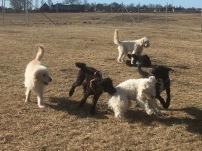 Molly, Hebbe, Charlie, Buddy, Saga och Musse.