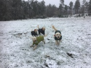 Hundarna gillar snön