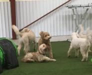 Bosse ligger ner, Charlie, Bailey och Saga är runt honom.
