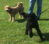 Bailey och Bently