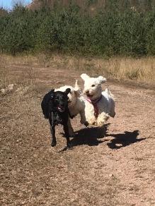 Flygande hundarna