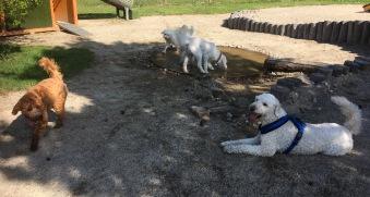 Samling vid vattenhålet och Mitzy vilar