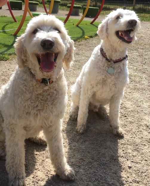 Charlie och Fabbe, helsyskon