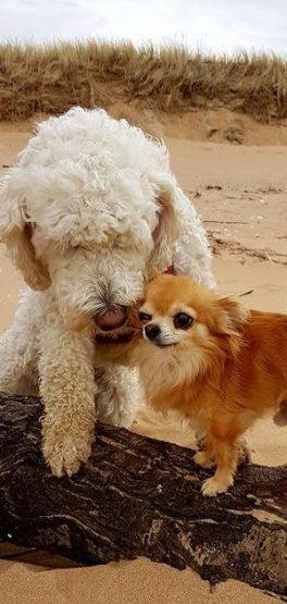 Fina vänner, Saga och Putte