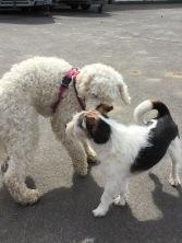 Här hälsar Saga på det lilla charmtrollet Björn, som var stallets hund.