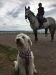 Coola tjejen Saga, med Jenny och häst bakom