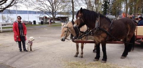 De fina hästarna som drog vagnen vi åkte på