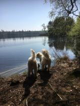 Vacker vårdag och nöjda hundar