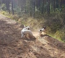 Tre glada hundar