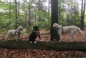 Saga, Nova och Charlie