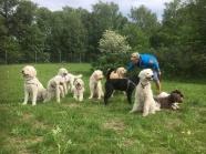 Bästa gruppbilden.... Det är verkligen svårt.... Detta var den bilden med minst antal tvåbenta ;) hundar från vänster : Hubbe, Saga, Mitzy, Charlie, Pyret, Melker, Musse, Aslan, Whiskey och Snöa