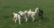 Mitzy, Charlie, Saga och Musse
