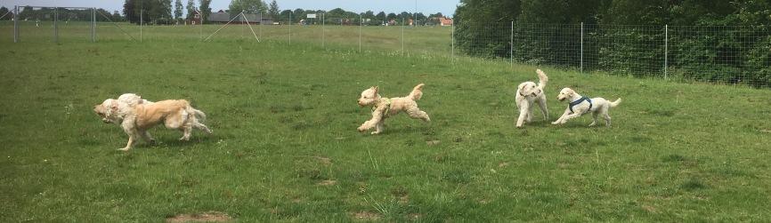 Härligt att se dessa glada snabba hundar