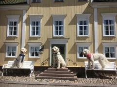 Stora hundar... i Astrid Lindgrens värld