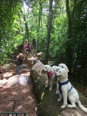 Häftigt klätterträd. Semester med härliga vänner på Astrid Lindgrens värld