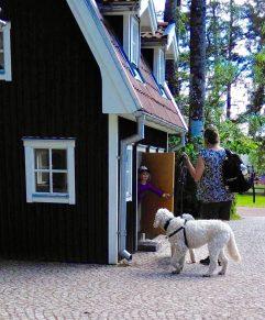 Fröken välkomnar hundarna och mig in i skolan