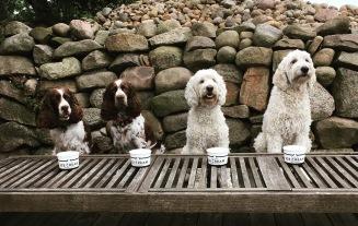 Sötnosar väntar på att få hugga in på hundglassen från Hugo och Celine