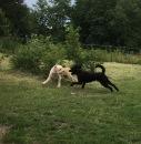 Pyret och Hebbe