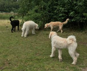 Hebbe, Harry, Pyret och Bosse