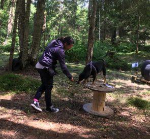 Gulliga Tessa tränar dogparkour