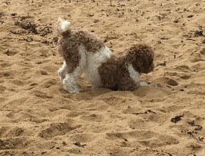 Gräva är kul! och är man på stranden så...
