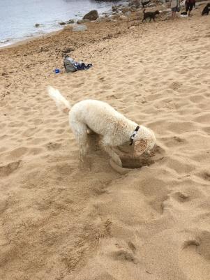 Torsten i grävaretagen, bra strandaktivitet, ju