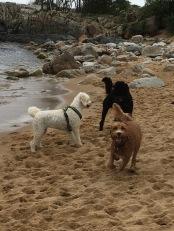 Mitzy, Albin och Bailey
