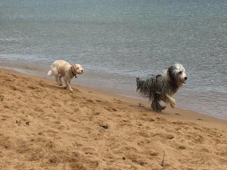 Härligt att sträcka ut på stranden