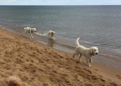 Härliga glada hundar