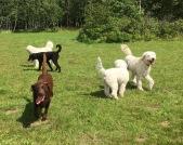 Simon, Hebbe, labradoren Molly, Saga och Charlie.