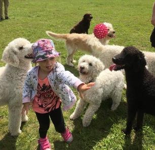 Bollen i luften och fullt ös i nästa sekund. Hundarna är så hänsynsfulla mot Milia trots att de är mycket leksugna.