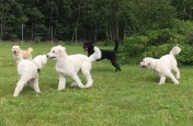 Pyret, Saga, Simon, Hebbe med bollen, och Charlie