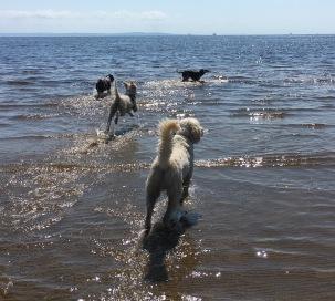 Lediga hundar leker