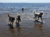 Så vacker dag med sol, glada hundar och mycket skratt