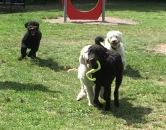 Simon och Hebbe kampar om en grön grej, Buddy och Saga har tagat upp jakten...