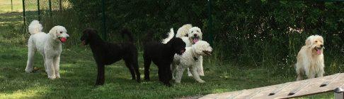 Simon, Hebbe, Buddy, Charlie, Saga och Pyret. Underbara hundar!
