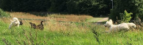 Lek i högt gräs