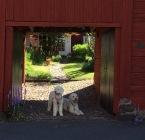 Vackert, som sagt. Många fina innergårdar vid de gamla kåkarna.