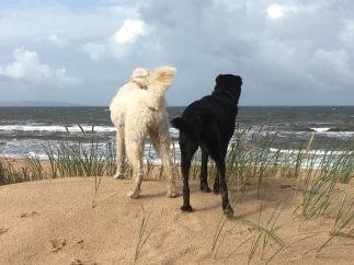 Charlie och Sienna blickar ut över det vackra havet