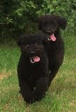 Buddy och Hebbe